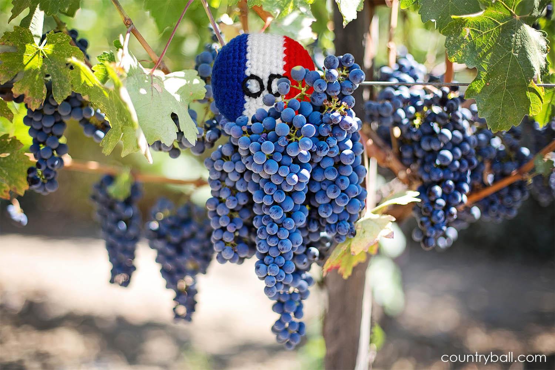 Franceball in a Vineyard