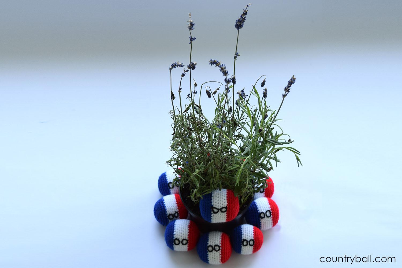 Franceball's favorite flower: Lavender