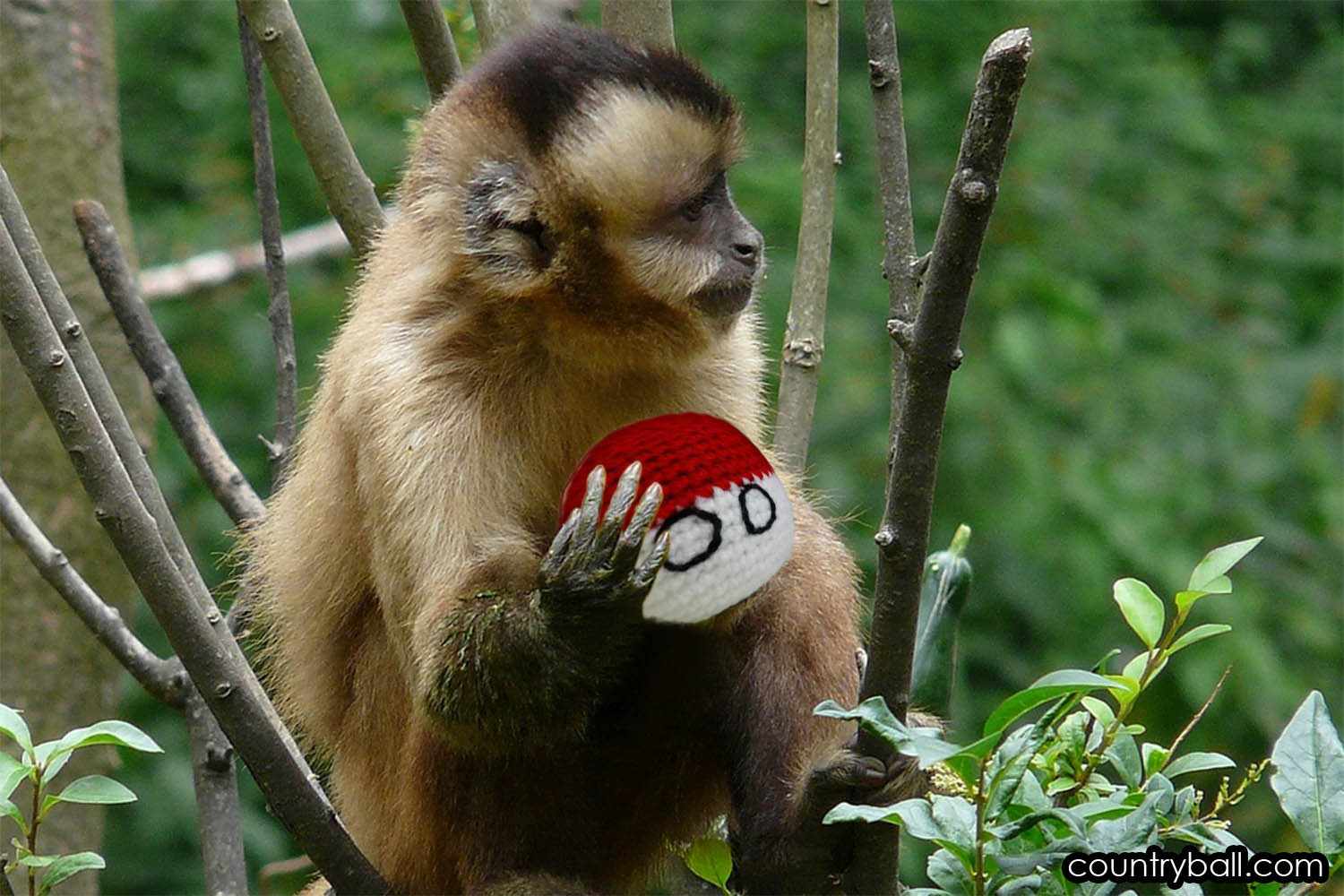 Indonesian Monkey with its favorite Indonesiaball