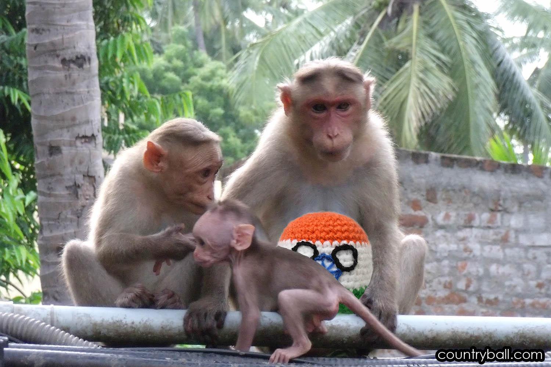 Monkeys stole Indiaball